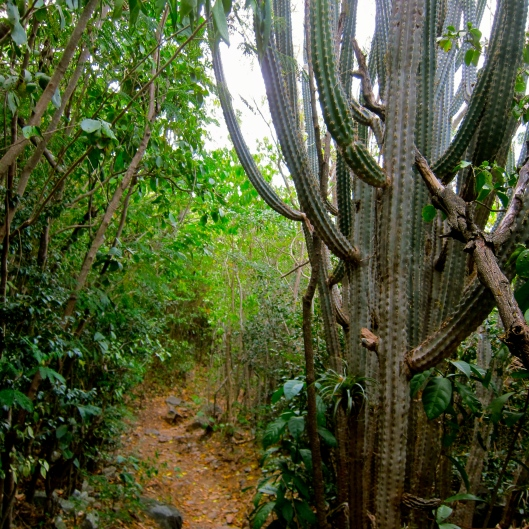 Cacti and the Path