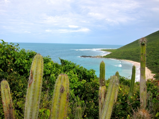Cacti and Private Beaches, St Martin