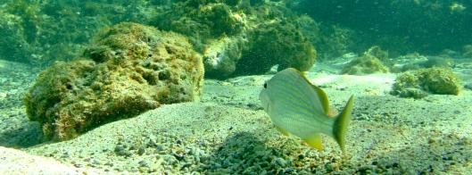 Underwater Friends, Pinel