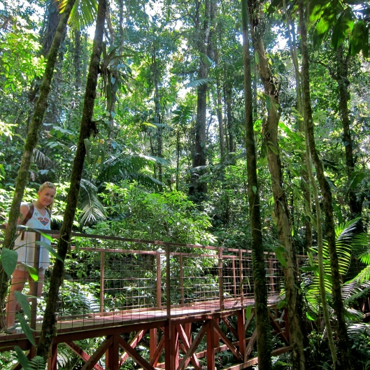 Hanging Bridges Rainforest Hike - Arenal
