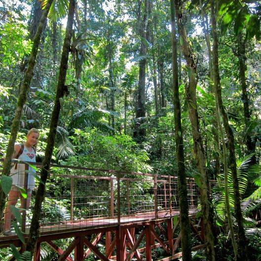 Hanging Bridges Rainforest Hike - Arenal