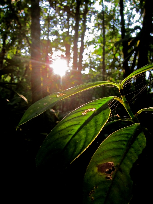 Sun's Receding