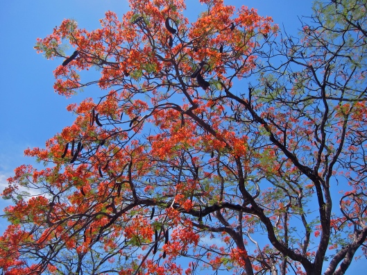 Tamarind Blooms