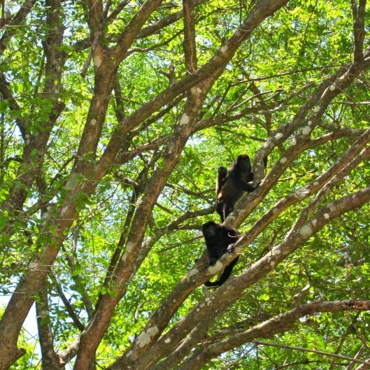 Monkeys Overhead