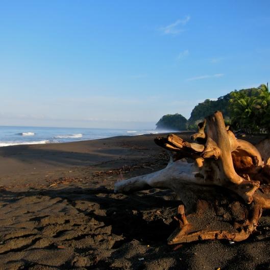 Playa Hermosa Driftwood