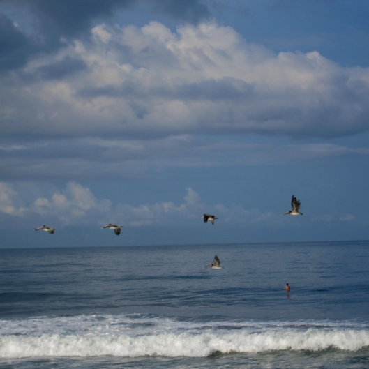 Solo Session, other than the Pelicans