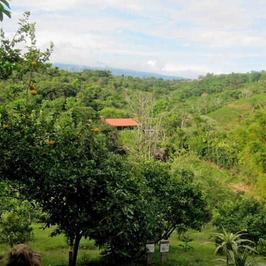 On premise orchard, Xandari Resort, Alajuela