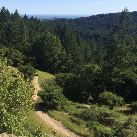Ocean View Trail, Muir Woods