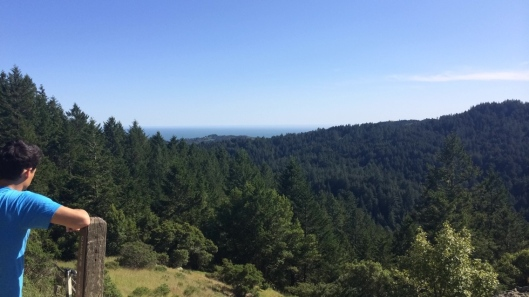 Ocean View Trail, Muir Woods 2