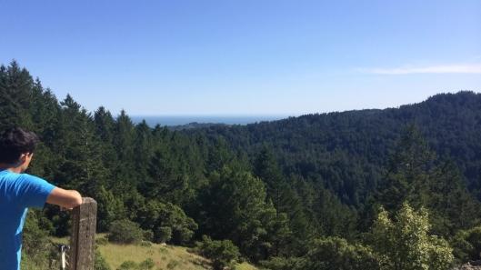 Ocean View Trail, Muir Woods 2